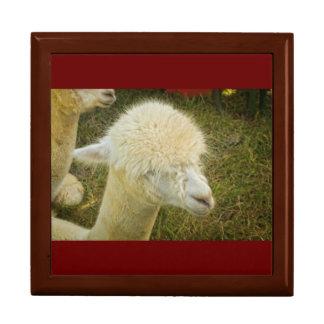 Porträt des weißen Alpakas Geschenkbox