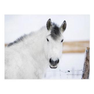 Porträt des weißen Pferds Postkarte