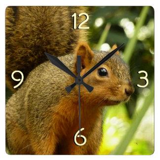 Porträt einer Eichhörnchen-Natur-Tier-Fotografie Quadratische Wanduhr