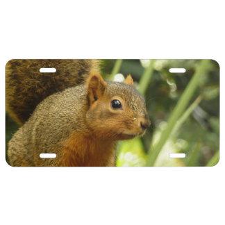 Porträt einer Eichhörnchen-Natur-Tier-Fotografie US Nummernschild
