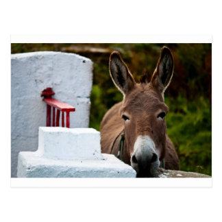 Porträt eines Esels in Irland Postkarte