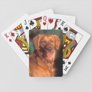 Porträt eines golden retriever spielkarten