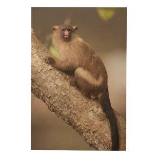 Porträt eines Marmoset-Affen Holzleinwand