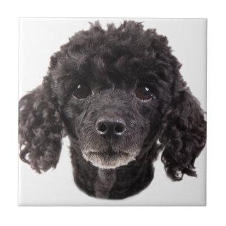 Porträt eines schwarzen Pudels Kleine Quadratische Fliese