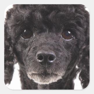 Porträt eines schwarzen Pudels Quadratischer Aufkleber