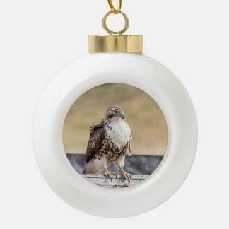 Porträt eines unreifes Rot angebundenen Falken Keramik Kugel-Ornament