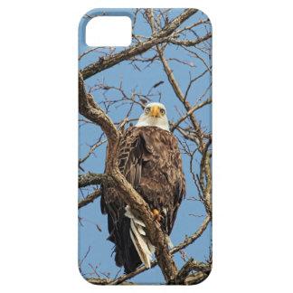 Porträt eines Weißkopfseeadlers Etui Fürs iPhone 5