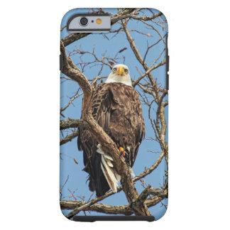 Porträt eines Weißkopfseeadlers Tough iPhone 6 Hülle
