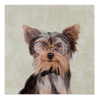 Porträt Herrn Yorkshire Terrier Poster