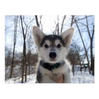 Porträt im Freiendes heiseren Hundewelpen Postkarte