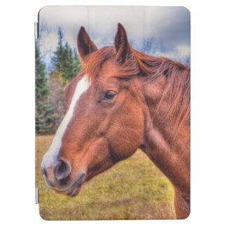 Porträt Sauerampfer-Stuten-des pferdeartigen iPad Air Cover