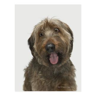 Porträt von Briard Hund Postkarte