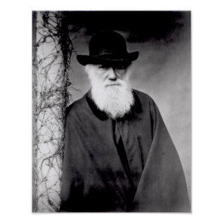 Porträt von Charles Darwin 1881 Poster