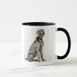 Porträt von Weimaraner Hund Tasse