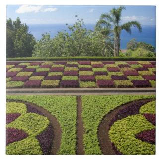 Portugal, Madeira-Insel, Funchal. Botanisch Fliese