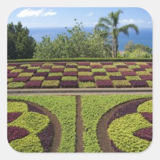 Portugal, Madeira-Insel, Funchal. Botanisch Quadratischer Aufkleber