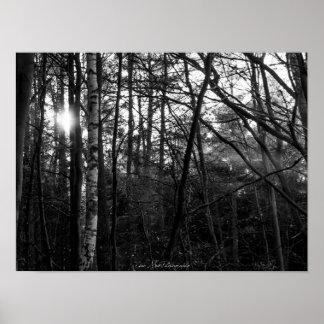 Poster - Wald, Sonnenaufgang, schwarz-weiss