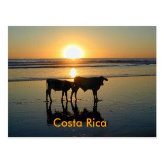 Postkarte Bejuco Kuh-Land, Costa Rica