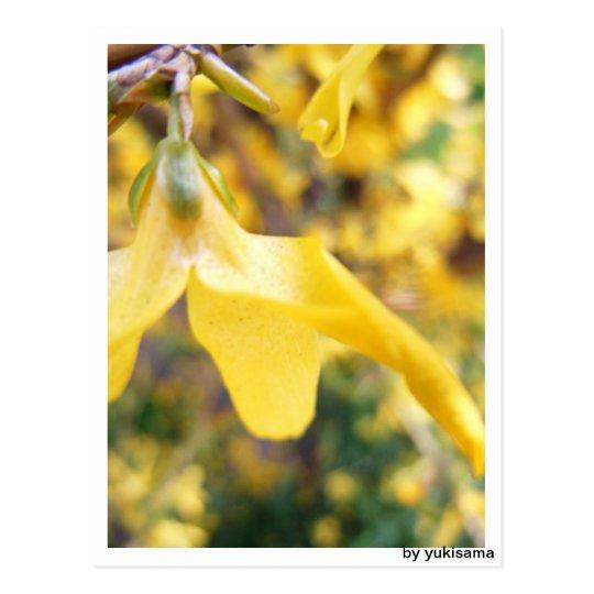 Postkarte - Belbe Blüte