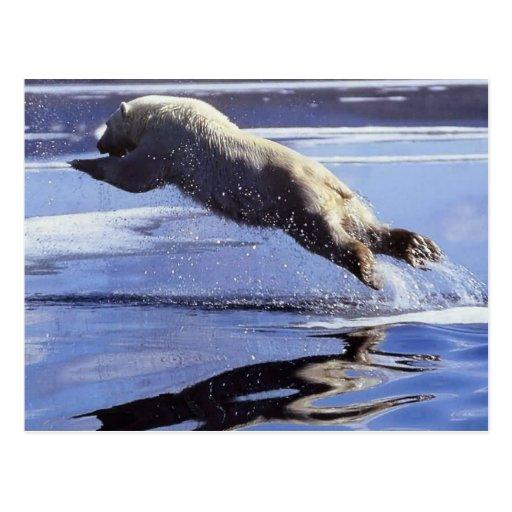 Postkarte der Eisbär-Tier-Reihen-#13