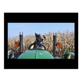 Postkarte des Hundes auf Traktor