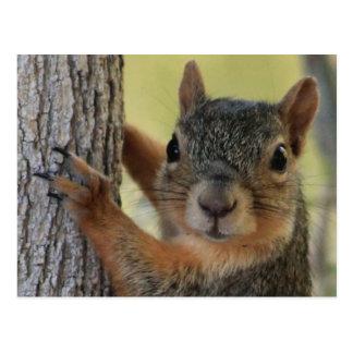 Postkarte, die Baum-Eichhörnchen kennzeichnet