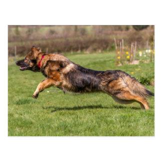 Postkarte, die Schäferhund-Hundeelsässer springt Postkarte