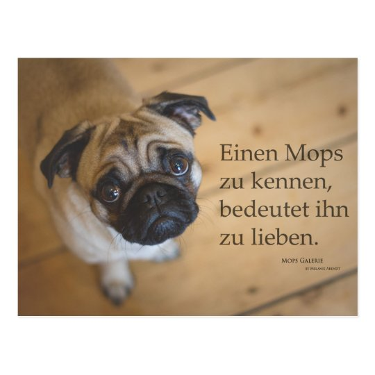 """Postkarte """"Einen Mops zu kennen ...."""
