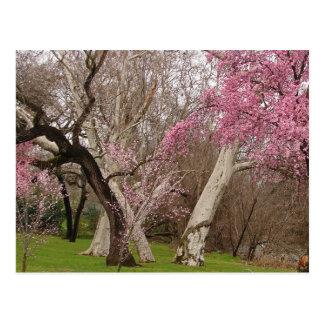 POSTKARTE - Frühjahr in Chico, CA
