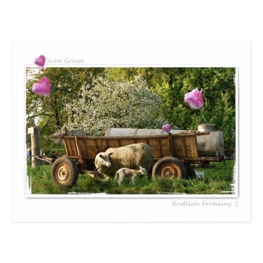 Postkarte: Frühling Postkarte