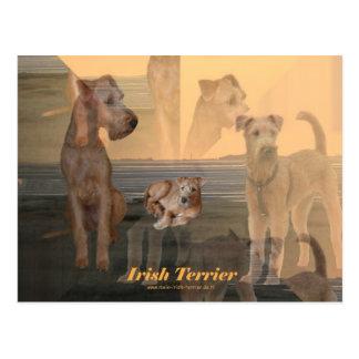 """Postkarte """"Irish Terrier"""""""