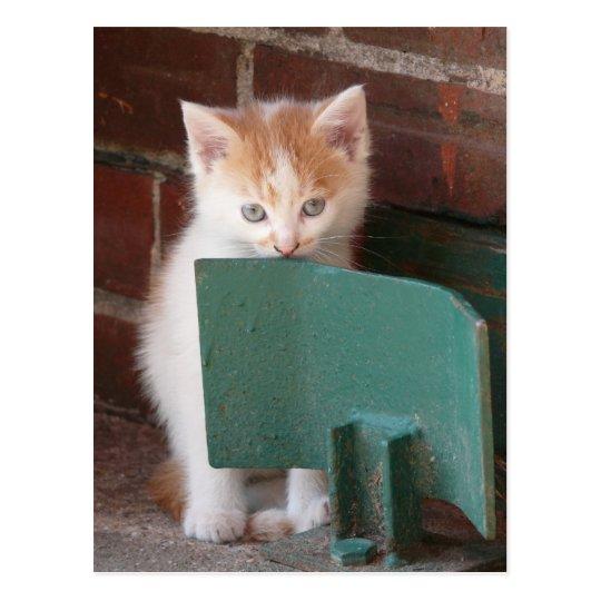 "Postkarte ""junge Katze"""
