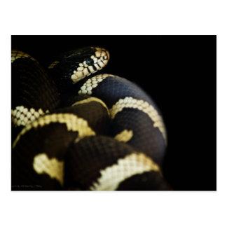 Postkarte Kalifornien-König-Schlange