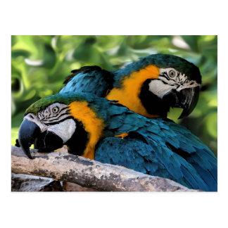 Postkarte/Macaws Postkarte