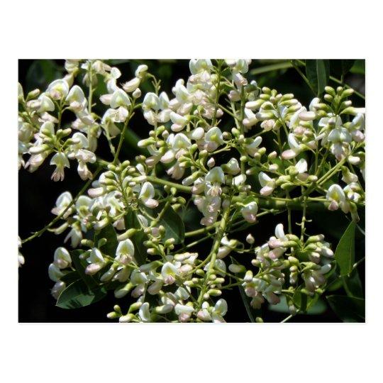 Postkarte mit Blüten