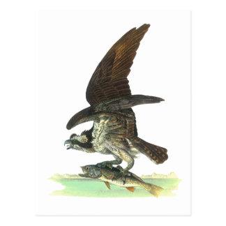 Postkarte: Osprey - John Audubon Postkarte
