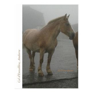 Postkarte Pferd unter dem Regen
