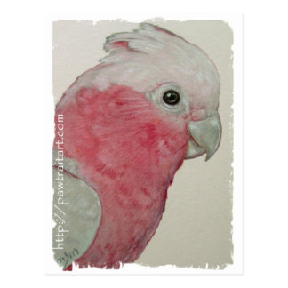Postkarte - Rose Breasted Cockatoo