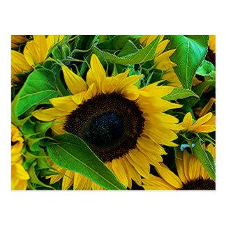 Postkarte Sonnenblumen