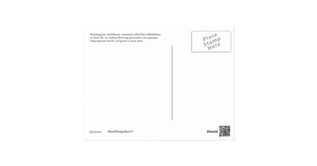postkarte stern von bethlehem blume postkarten zazzle. Black Bedroom Furniture Sets. Home Design Ideas