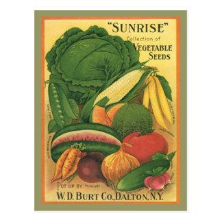 Postkarte Vintage antike Burt Co Gemüse-Samen