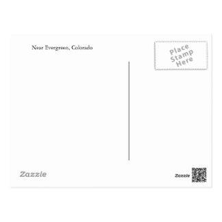 Postkarte vom Immergrün, Colorado