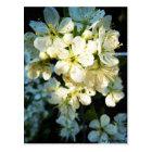 Postkarte - Weiße Blüten