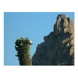 Postkarten-Berggipfel-Spitze Saguarro Kaktus-Blüte Postkarte