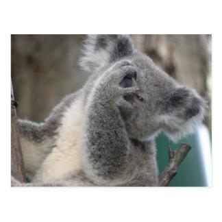 Postkarten-Koala QLD Australien Postkarte