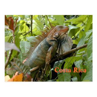 Postkarten-Leguan Costa Rica Postkarte