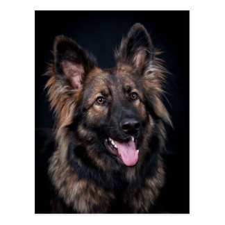 Postkarten-niedlicher Schäferhund-Hundeelsässer Postkarte