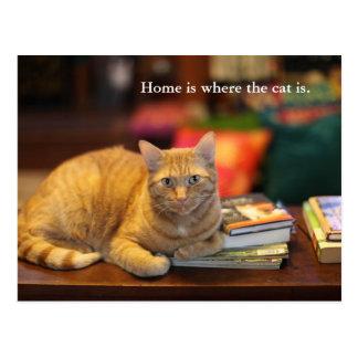 Postkarten-Orangen-Katze Postkarte