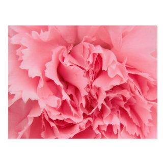 Postkarten-rosa Gartennelken-nahes hohes Postkarten