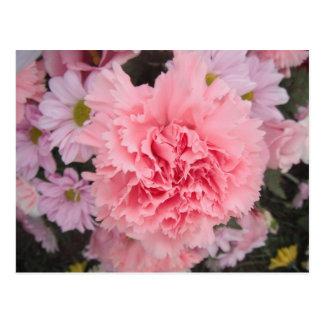 Postkarten-rosa Gartennelken-Schönheit Postkarte